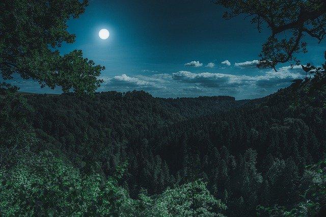 noční les